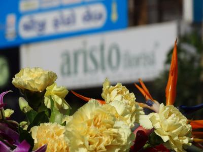 ARISTO FLORIST, Ambavadi