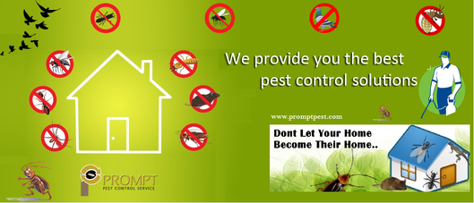 Prompt Pest Control Services