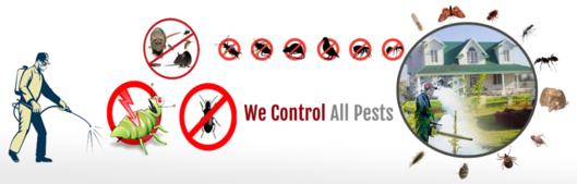 Prompt Pest Control Services